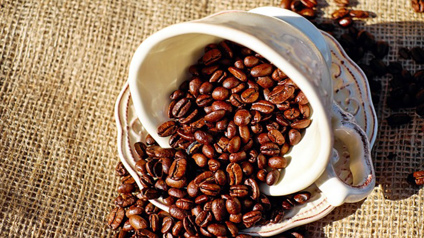 pelatihan kopi